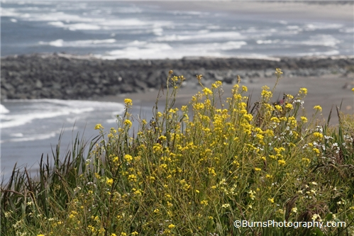 Yellow Flowers Near Shore