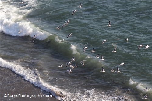 Seagulls flying with the waves