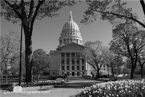 Wisconsin Capitol Tulips Black and White