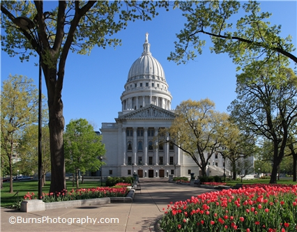 Picture of Madison Wisconsin State Capitol Tulips