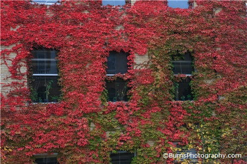 Fall Leaves on Birge Hall