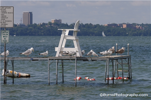 Picture of Seagulls and Chair on Dock