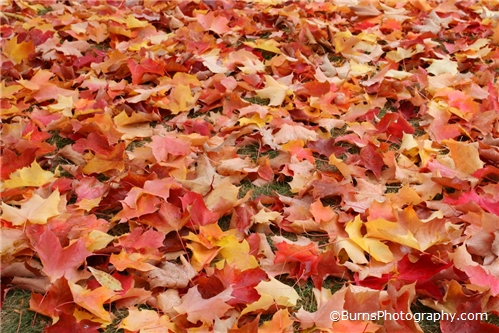 Picture of Leaves in the Fall