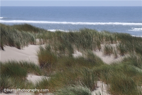 Picture of Sand and Grass on the Beach