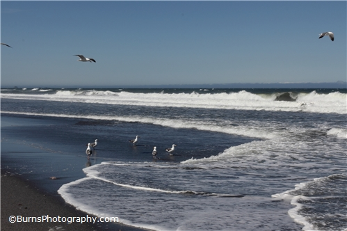 Picture of Seagulls on the Beach
