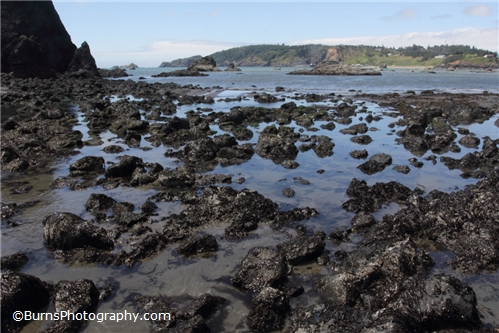 Picture of Tide Pools