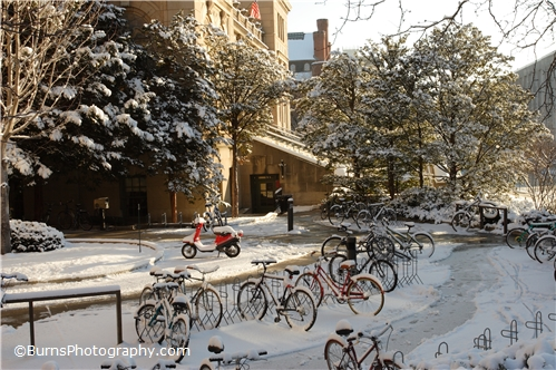 Picture of Bikes in Snow