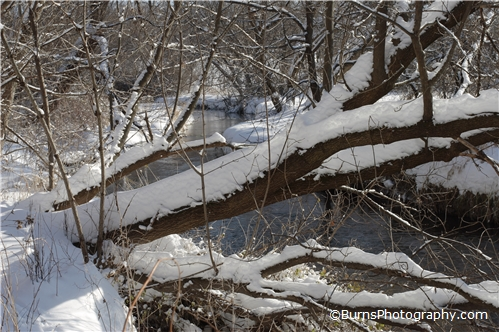 Snow Covered Trees by River